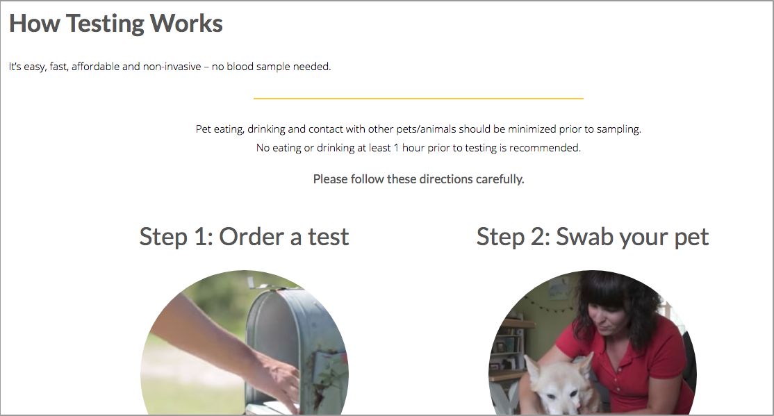 How Dog DNA Testing Works GenSol